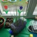 Огород на подоконнике «Во саду ли, в огороде»
