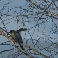 Беседа о зимующих птицах