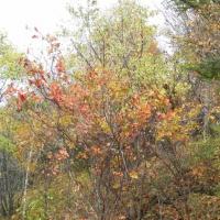 Фотоотчет «Осенние фантазии». Старшая группа