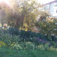 Фотоотчет «Осенние прогулки по дорожкам нашего парка»