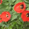 Фотоотчёт «Весна идёт, весне дорогу!»