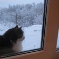 «Любопытная кошка»