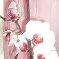 Цветочный хоровод на подоконнике!