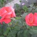 Моё увлечение цветами