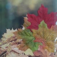 Дидактическое пособие «Листья»