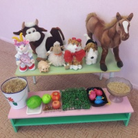 Конспект непосредственной образовательной деятельности с детьми старшей группы на тему «Домашние животные»