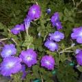 Фотоотчёт «Цветы на участке»