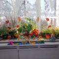 Конкурс в ДОУ «Огород на окне» (фотоотчёт)