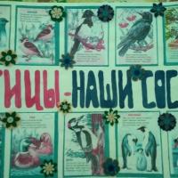 Фотоотчет о работе по экологическому воспитанию в детском саду «Птицы— наши соседи»