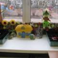 Наш огород на подоконнике