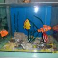 Макет аквариума для уголка природы. Мастер-класс