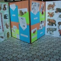 Двухсторонний лэпбук по экологии «Дикие и домашние животные»