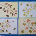 Конспект прогулки «Такие разные листья»