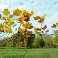 История и традиции народного праздника Осенины. Рецепт фаршированных помидоров