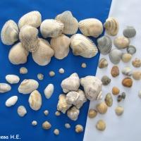 Познавательная беседа «Мир морских ракушек» с элементами творческой деятельности