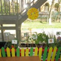 Фотоотчет «Мы сажали огород, посмотрите, что растёт!»
