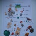Дидактическая игра по развитию речи «Рассказы с картинками»