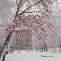 Фотоочёт «Первый снег».