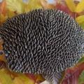 Осенняя поделка с использованием природного материала «Малютка ежик»