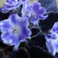Цветочки на подоконнике (фоторепортаж)