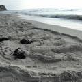 Объемные песочные фигуры. Чем заняться с ребенком на пляже во время летнего отдыха. Фотоотчет
