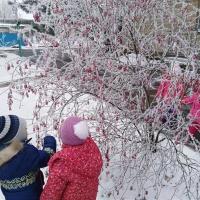 Наблюдение за растительностью зимой