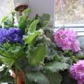Дети— цветы жизни! Цветы— источник радости!