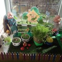 Огород на подоконнике «Что за чудо огород, бабка с дедом здесь живет!»