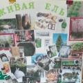 Конспект занятия по нравственно-экологическому воспитанию «Берегите елочку-красавицу» (подготовительная к школе группа)