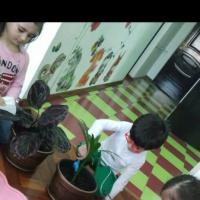 Консультация для воспитателей «Воспитание любви к природе»