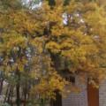 Фотоотчёт «Сказочная Осень»