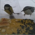 Фотозарисовка «Птички у кормушки»