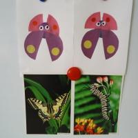 Детский мастер класс по аппликации «Бабочка»