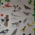День птиц (фотоотчёт)
