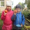 Фотоотчет по проекту «Зеленый огород на окне».