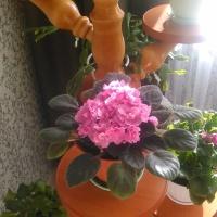 Фотозарисовка «Мои любимые комнатные растения»