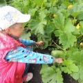 Фотоотчет «Фруктово-овощная страна»
