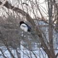 Как мы кормили птиц зимой. Фотоотчет