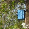 Фотоотчет «Весенние наблюдения за птицами»