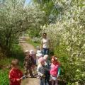 Экскурсия к цветущим деревьям