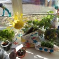 Оформление уголка в группе «Огород на окне» в подготовительной к школе группе