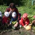 Проект «В огород и сад пойдем— витамины там найдем!»