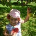 Яблочный Спас не пройдет мимо нас! Фотоотчет. Часть первая