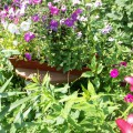 Фоторепортаж мой сад и огород