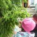 Целевая прогулка «Путешествие по летней экологической тропе» для детей подготовительной группы