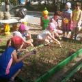 Методическая разработка по экологическому воспитанию «Огород в детском саду»