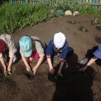 Фотоотчет «Формирование экологической культуры у детей старшего дошкольного возраста»
