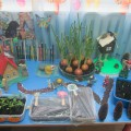 Огород круглый год «Машины сказки» (фотоотчет)