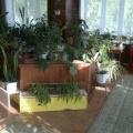 Конспект экскурсии в зимний сад для детей средне-старшей группы «Незнайка, просит о помощи!»