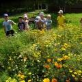 «Наступило лето, всё в цветы одето!» Наблюдения в цветнике. Фотоотчёт